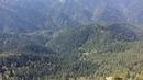 Белоголовые сипы в природном парке Большой Тхач