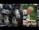 Как пчёлы делают мёд