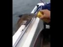 на рыбалке как на