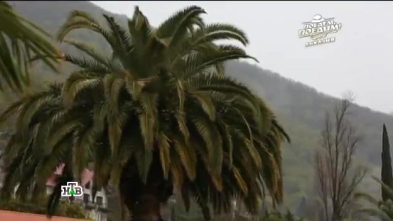 Передача НТВ - Поедем-поедим. Снята в Абхазии зимой 2017 года. » Freewka.com - Смотреть онлайн в хорощем качестве