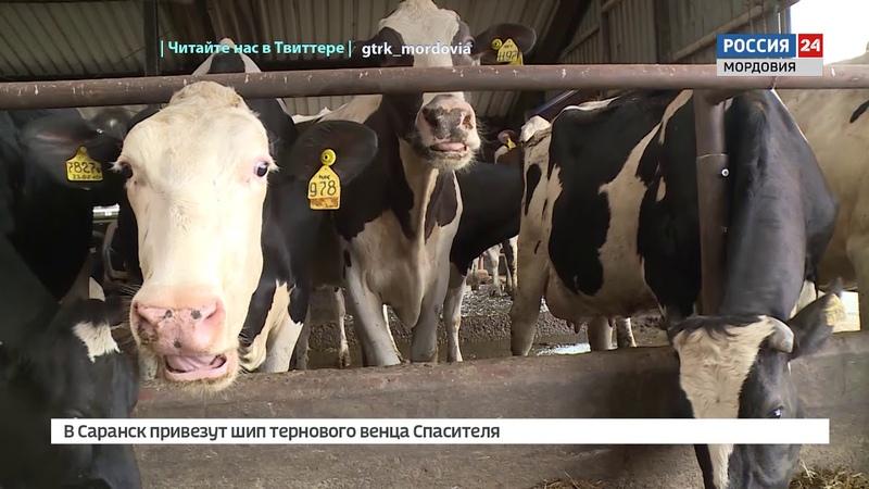 Владимир Волков обсудил развитие молочного животноводства в Мордовии