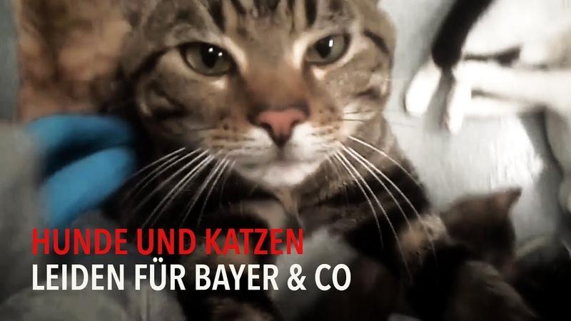 Hunde und Katzen leiden für Bayer Co PETA D