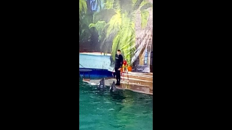 Дельфинария в гостях г.Чебоксары 17.03.2018 парк Амазония