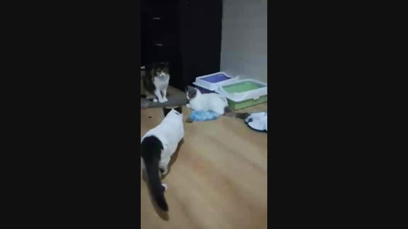 Kittens from Area Sacra