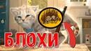 Мой Виртуальный Котенок у нашего Котёнка БЛОХИ - Мультик игра для детей