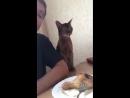Хитрая кошачья любовь 1 mp4