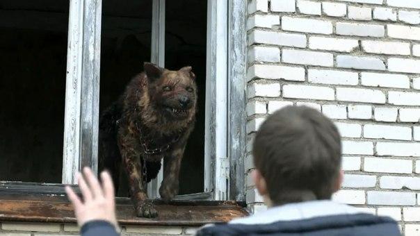 Чернобыль зона отчуждения премьера