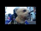 Собака байкер мото пёс Стич :) It's My Life!