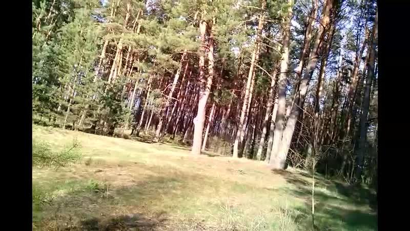 я в лесу на кордоне