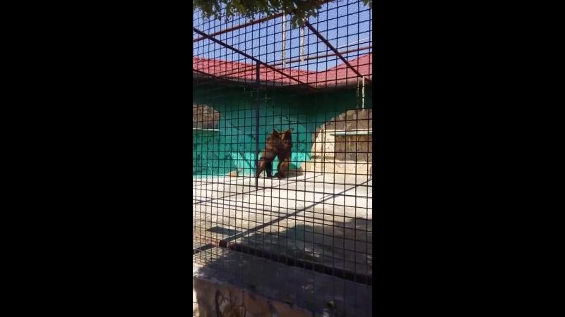 Два медведя из Самары А ГДЕ ТРЕТИЙ