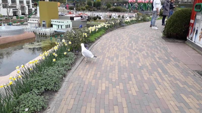Seagull in Den Haag