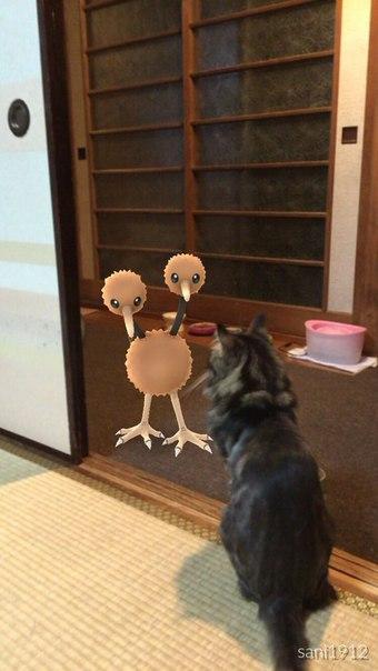 Животные способны видеть монстров из игры Pokmon Go