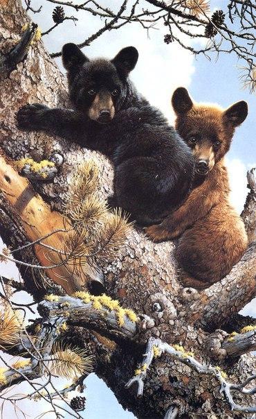 Акварельный гиперреализм от известного во всем мире художника-натуралиста Carl Brenders