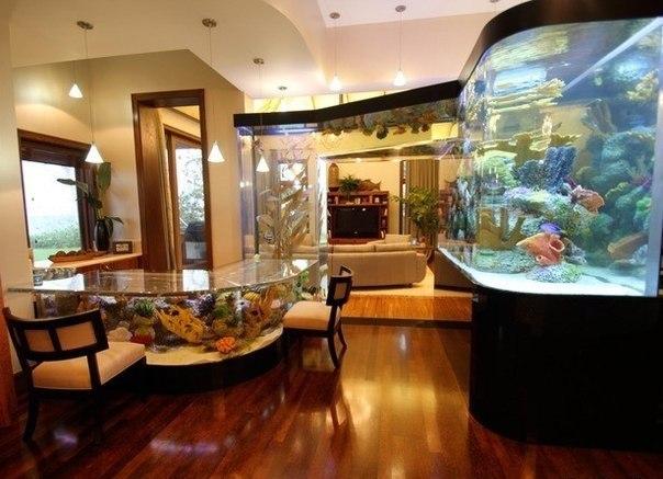 Необычный аквариум.