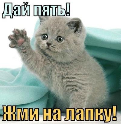 Лев Колотилов, 3 августа 1999, Челябинск, id28874966