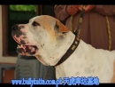 Nolakhiya and Others Real Deal Bully Kutta