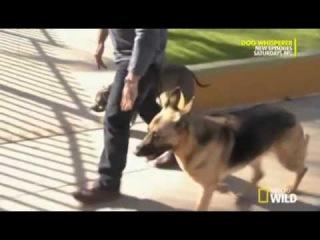 Переводчик с собачьего. 8 сезон - эпизод 7 часть 4 (DOG WHISPERER S8 EPI 7 part 4)