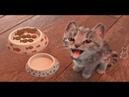 Маленькие Приключения Котенка мультик игра про котика Fun Kitty Makeover Party Kids Game