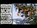 Турция: Апельсиновый рай. Аланья в январе. Зима в Аланье
