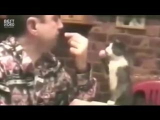 Кот глухонемого человека общается на языке жестов