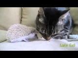 Кот, ежик и собака Офигенное видео!