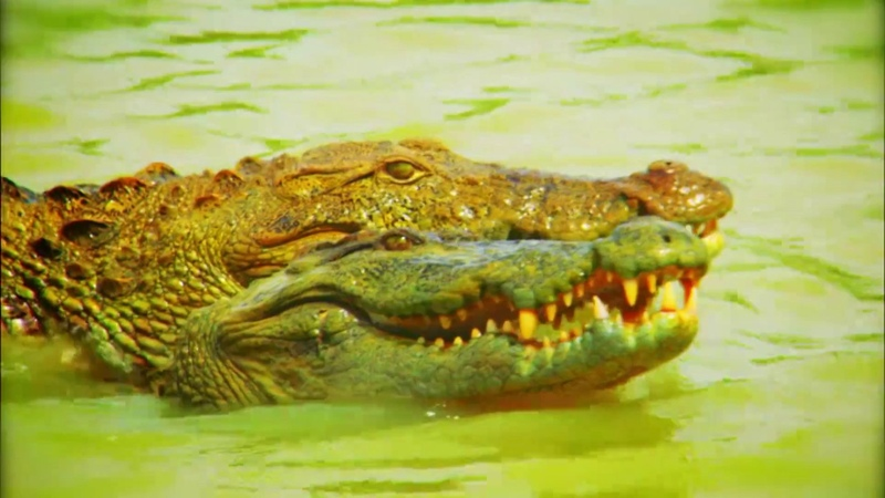 Неизведанные острова Амазонка плавающий лес