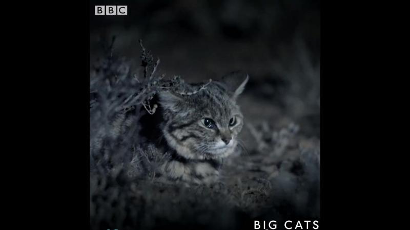 Милые дикие котятки в природе