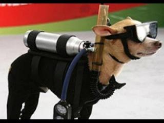 Собака инженера стреляет с катапульты [Dog shoots catapult]