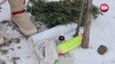 Блог садовода и огородника Светланы Кацаповой 102 вып подготовка деревьев к зиме
