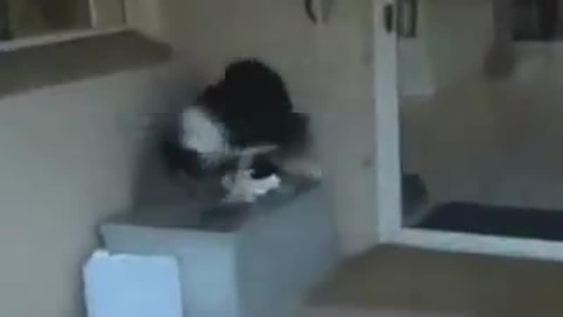 Кошка пропала на две недели а потом нашлась Такой была реакция собаки на её возвращение