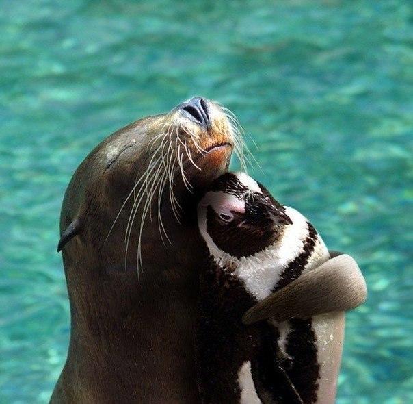 Морской котик и пингвин.