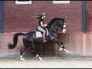 ~ Выездка ~ Dressage ~ Equestrian sport ~
