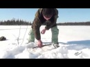 Рыбалка видео. Ловля щуки на капкан