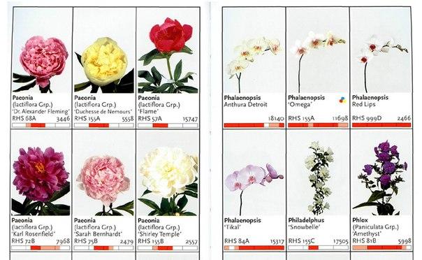 Каталог живые срезанные цветы голландия цветы живые купить красноярск