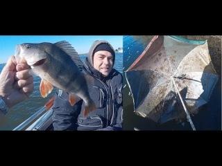 братья таймасовы рыбалка