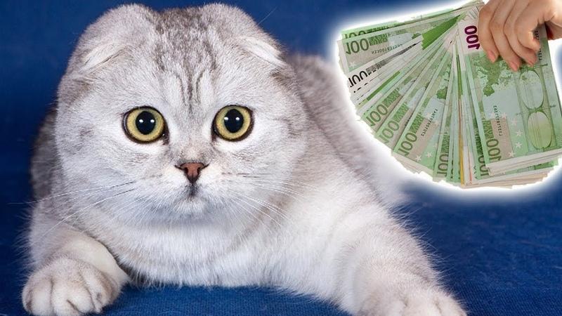 Кошки На Милион Факты Про Кошки Стоящие Целое Состояние