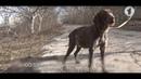 Собака по кличке Пенелопа ищет семью / Доброе утро, Приднестровье!