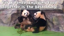 For a panda enjoying food together is the best thing in the world iPanda