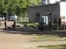 Омутнинск. Бродячие собаки в парке ДК  29.08.2013