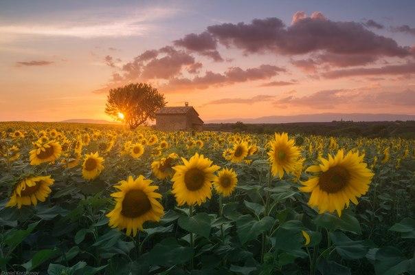 Июль в Провансе, Франция. Автор фото: Даниил Коржонов.
