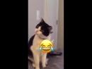 Кот в шоке от хозяйки .