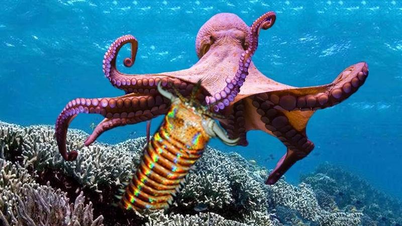 Bobbit Worm vs Octopus _ Bobbit worm Ambush to catch eel at the ocean