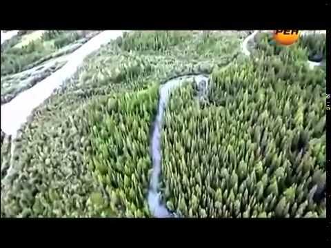 ТИСУЛЬСКАЯ НАХОДКА КОТОРОЙ 800 МИЛИОНОВ ЛЕТ