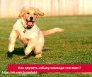 Команда «Ко мне» считается одной из самых важных, и ей должна быть обучена каждая собака.