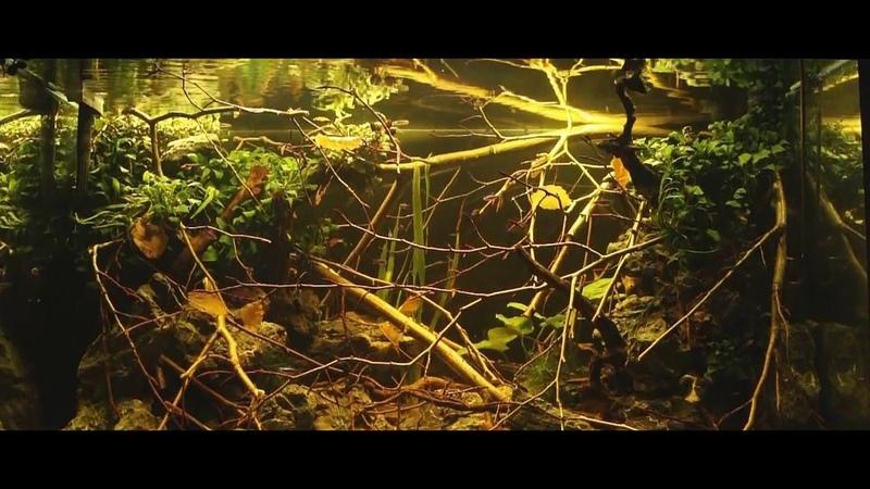 Blackwater | Amazon Biotop Aquarium | Part one