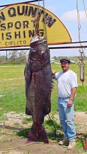 Самый большой черный морской окунь выглядит так. Рыбаку потребовалось больше час...