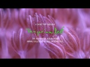 A Short Trip Through Tangerine Reef: The Audiovisual Album by Animal Collective Coral Morphologic