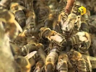 Агрофраншиза. Развитие пчеловодства в России. ч1