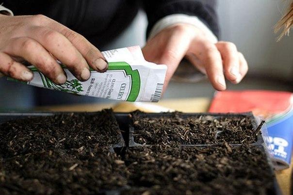 Посев на рассаду основных овощных культур