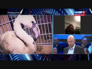 Розовый фламинго из Новокузнецка. Сюжет «60 минут»